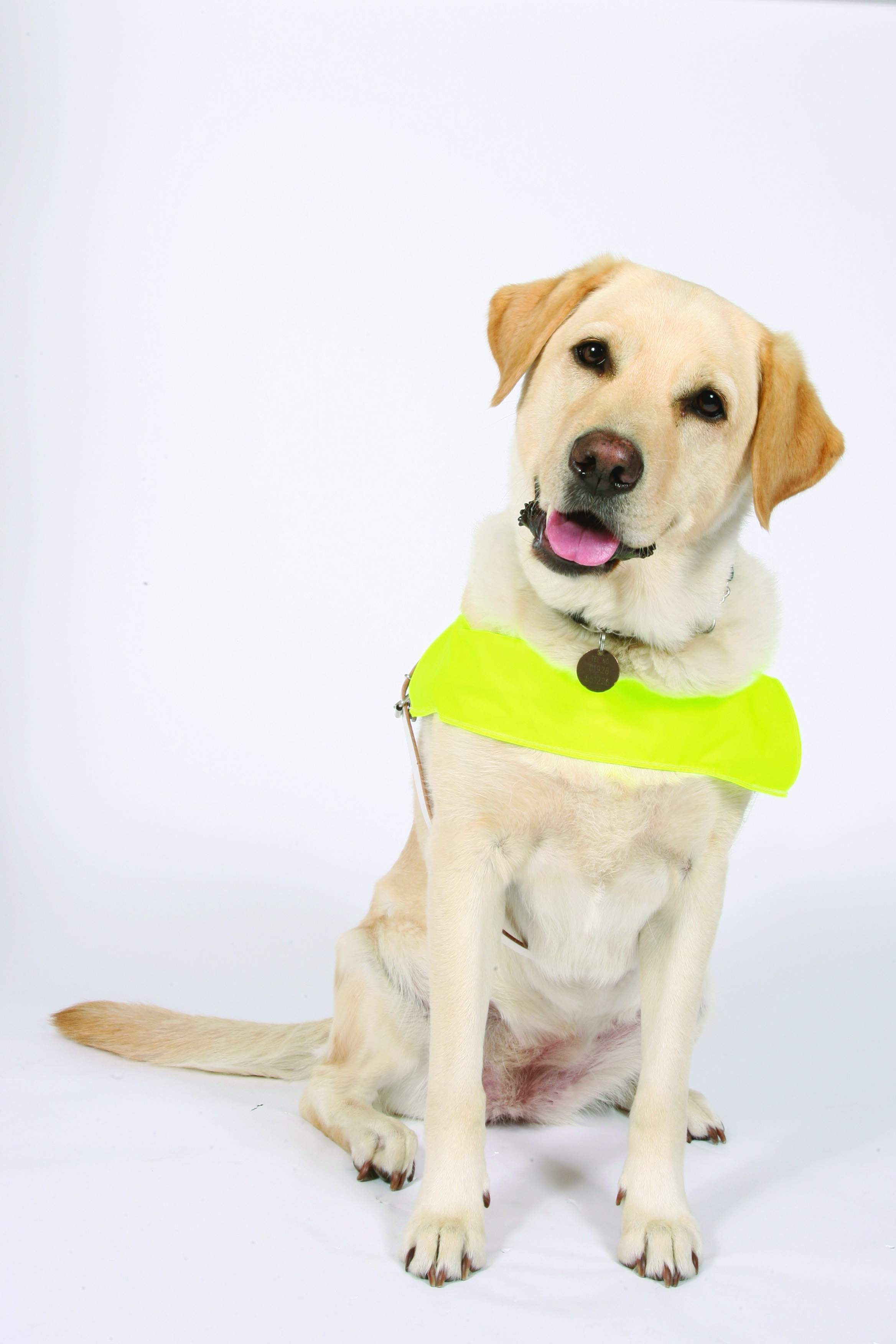 Guide Dogs Being Trained